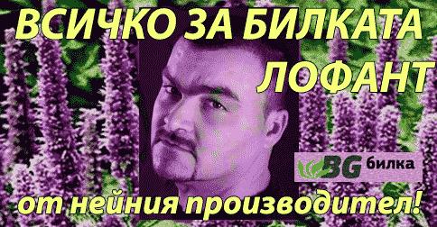 Тодор Тодоров производител на лофант