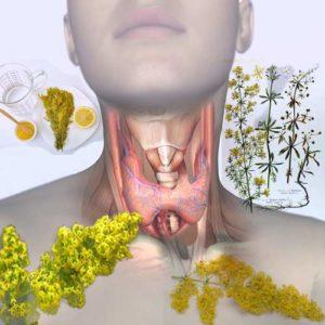еньовче щитовидна жлеза Хашимото