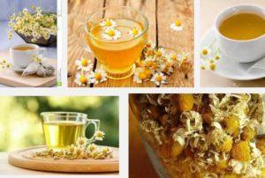 билка лайка чай лечебни свойства и ползи за лечение