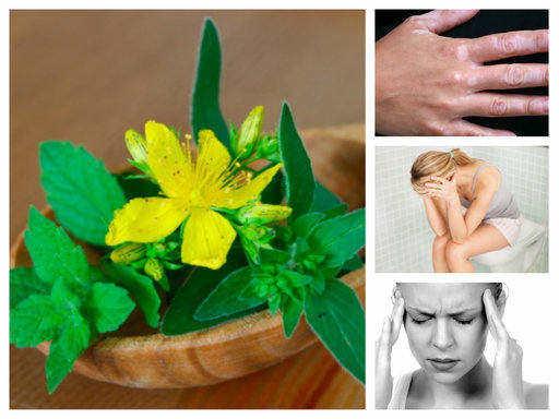 Жълт кантарион – лек за тялото и ума