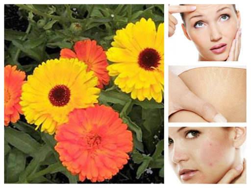 Невен – феноменалният природен лек, даряващ здраве и красота