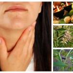 Лечение на щитовидна жлеза и Хашимото с билки и народна медицина