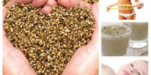 Конопено семе: ползи, лечение, мляко