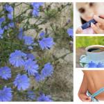 Глътка здраве с вълшебната цикория – изпитани рецепти със синя жлъчка