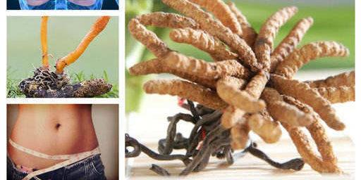 Кордицепс cordyceps: Противопоказания, мнения, Тянши