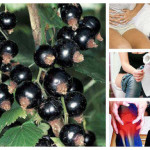 Тайните на суперплода касис: 101 ползи и рецепти с него