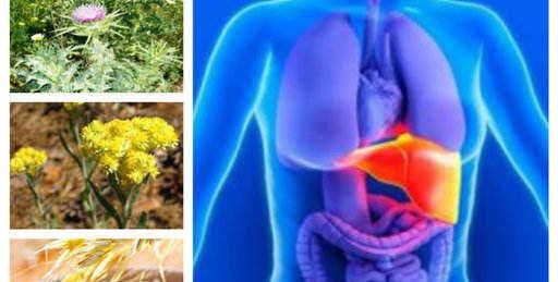 лечение на черен дроб билки пречистване