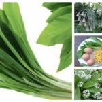 Топ рецепти с див чесън (левурда) – лечебни и кулинарни + Всичко за това природно чудо