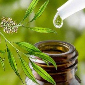 масло от чаено дърво цена