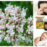 Валериана – спасението при нерви, безсъние, главоболие, гастрит и още куп неволи