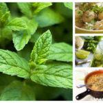 Джоджен – магията, която топи килограми и кисти, и лекува 101 болежки (Топ кулинарни и лечебни рецепти)