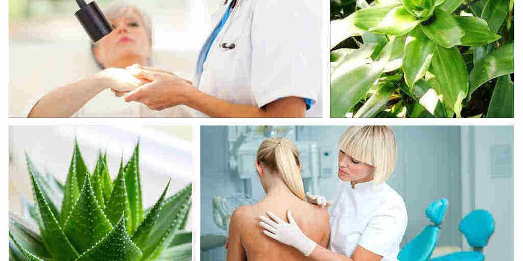 липом лечение билки лекарства симптоми