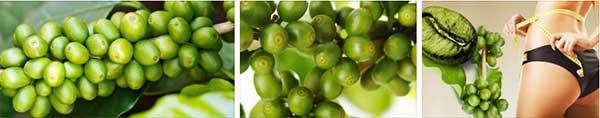 Зелено кафе, цена, за отслабване, Как да отслабна, странични ефекти