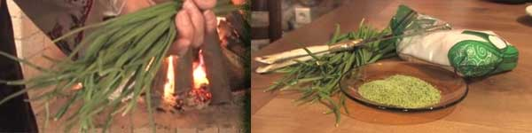 17 отглеждане самардала билка подправка цена лечебни свойства