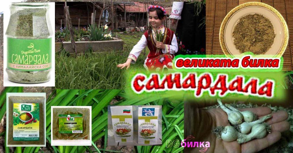 19 полезно растение самардала билка подправка цена лечебни свойства