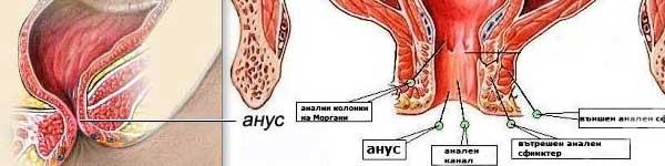 рак на дебелото черво - 05 - анус, анален канал